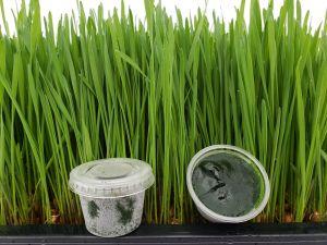 Frozen Wheatgrass Juice 30 cups