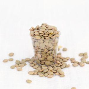 Green Lentils 500g - Organic