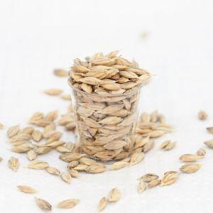 Wheatgrass Seeds - Spelt Organic Grain