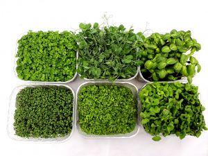Organic Supergreens Punnet Selection
