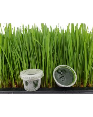 Frozen Wheatgrass Juice 30 cups
