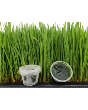 Frozen Wheatgrass Juice 90 cups