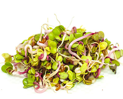 Organic China Rose Radish Seed - How to Grow China Rose Radish Sprouts