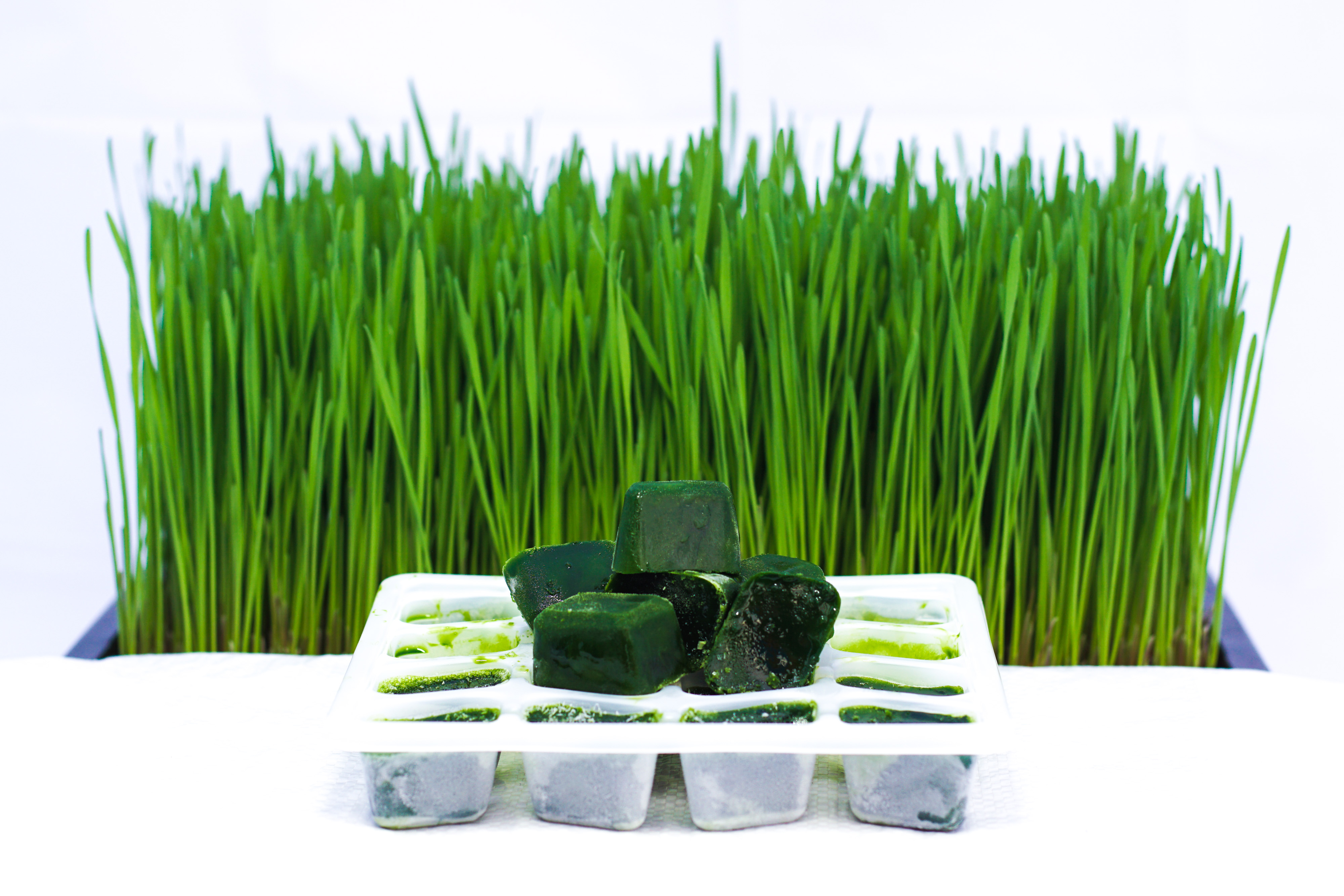 Frozen wheatgrass Juice Information & Instruction For Use