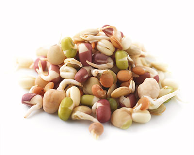 Organic Mixed Seed - How to Grow Mixed Bean Sprouts