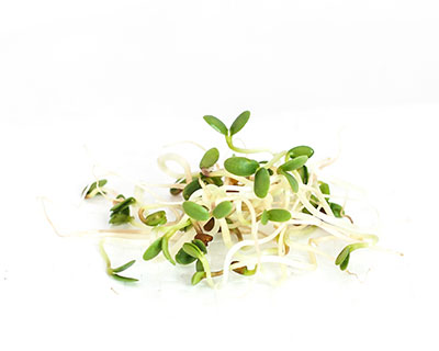 Organic Red Clover Seed - How to Grow Clover Sprouts