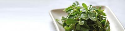 Purslane, Sunflower Greens and Fennel Salad