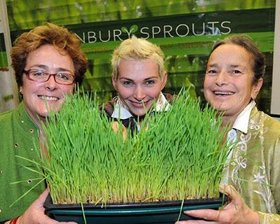 THE STORY OF ACONBURY SPROUTS